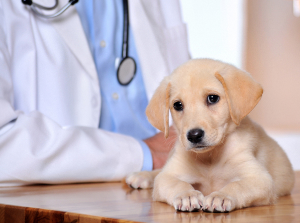 Washington Pet Clinic Insurance